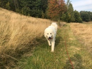 Die Bella auf dem Heimweg