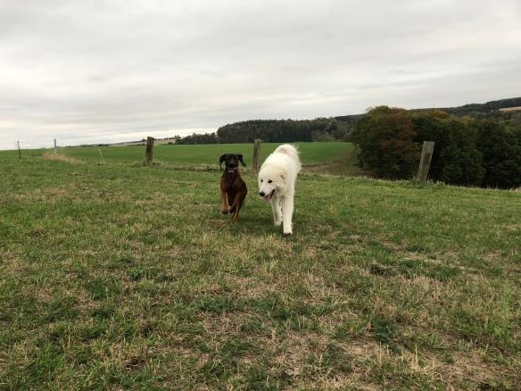 Die Bella und die Cora, ihre Bayerische Gebirgsschweißfreundi