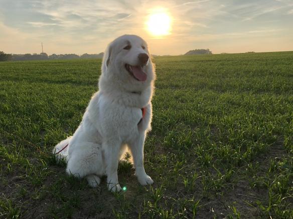 Die Bella und ihre liebe Sonne