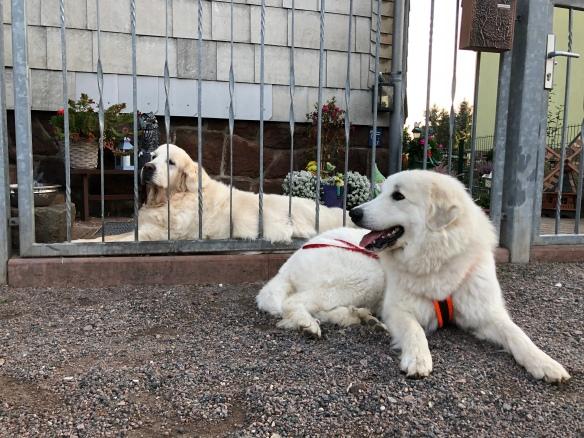 Die Bella und der Charlie