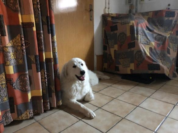 DIe Bella will zur Hundeschule!