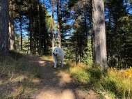 Waldrundgang