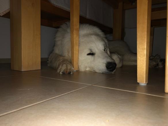 Bin müde, schlaft gut!