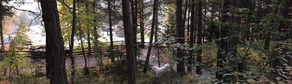 Morgenspaziergang in meinem Urlaubswald