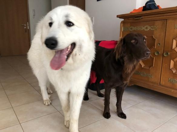Die Bella und die Shari