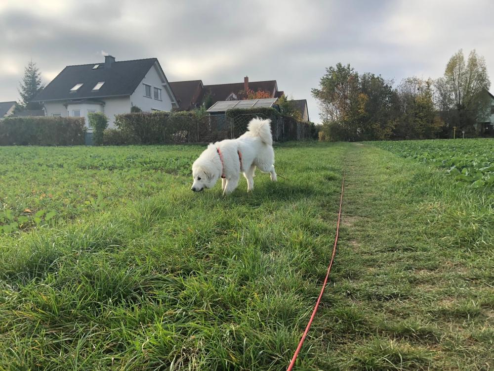 Die Bella macht einen Sonntagmorgenspaziergang …