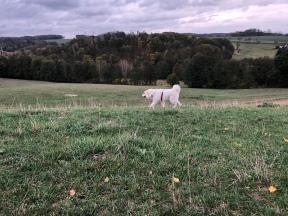 … und auf der großen Feldwiese