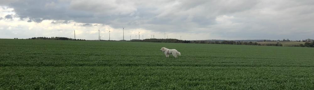 Die Bella auf dem großen Feld …