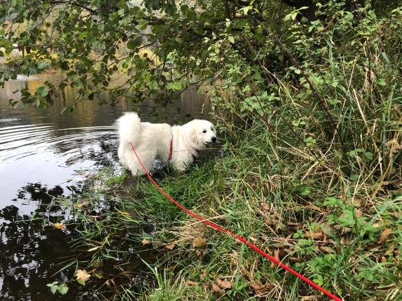 Die Bella geht baden