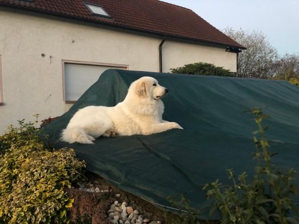 Die Bella bewacht ihren Garten