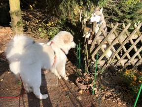 Die Bella hat einen neuen Freund