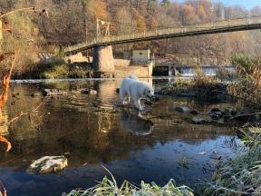 Baden an der Wackelbrücke