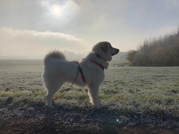 Die Bella macht einen Sonntagsspaziergang