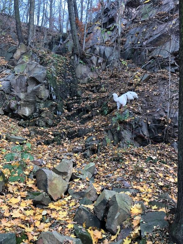 … am Wasserfall kann die kleine Berghündin richtig am Berg klettern. Durch ganz hohes Herbstlaub.