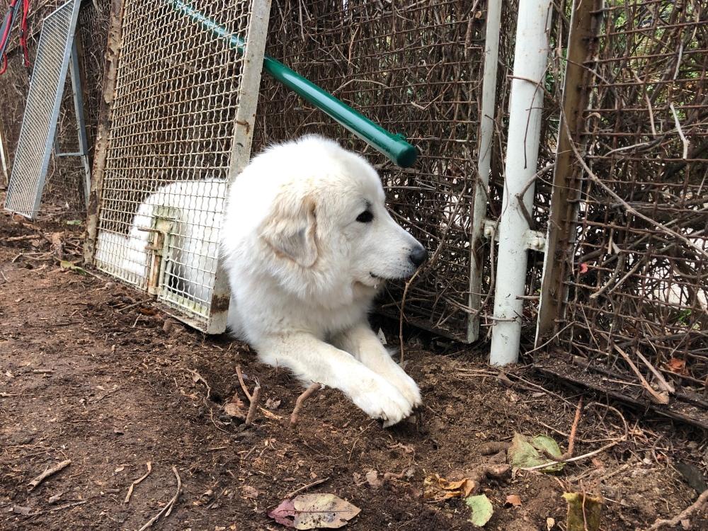Die Bella baut jetzt einen Zaun