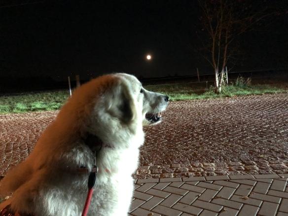 Die Bella und der Mond