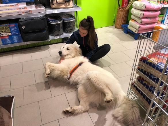 Die Bella ist mit ihrer kleinen Menschenschwester einkaufen