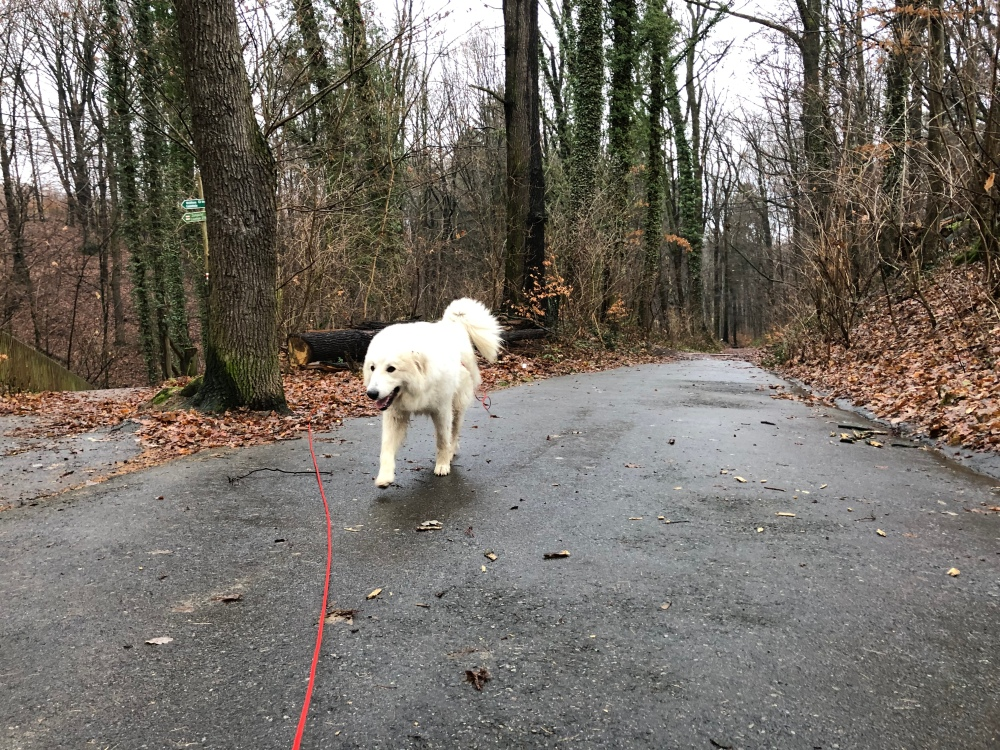 Gemütlicher Spaziergang