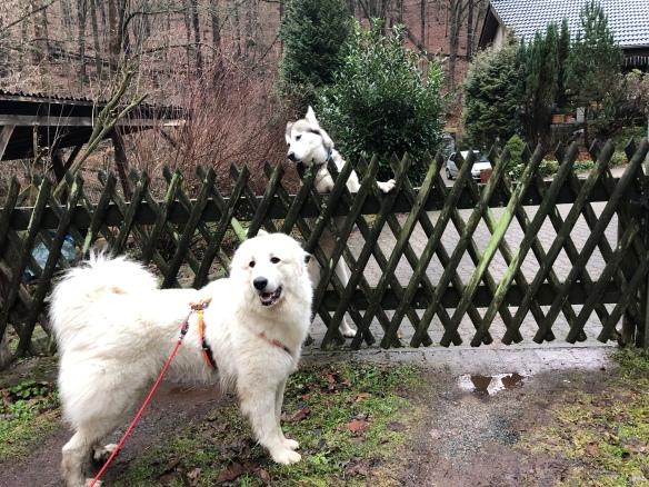 Zu Besuch beim Husky