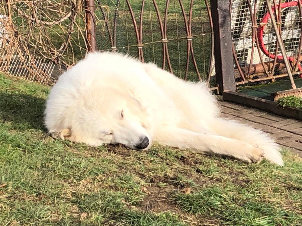 Die Bella liegt in der Sonne