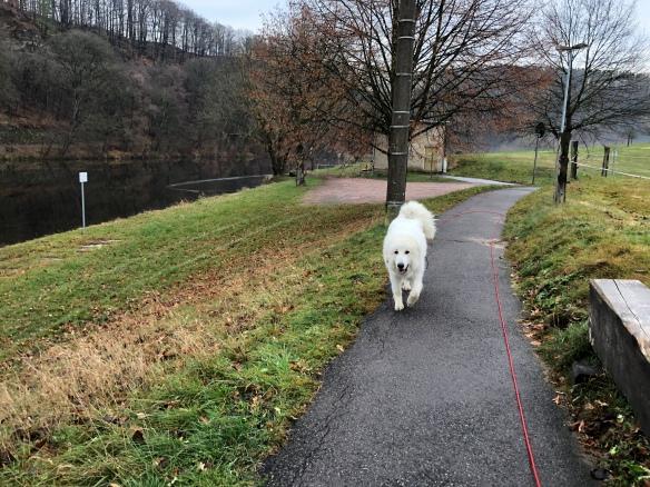 Auf dem Weg zur Wackelbrücke