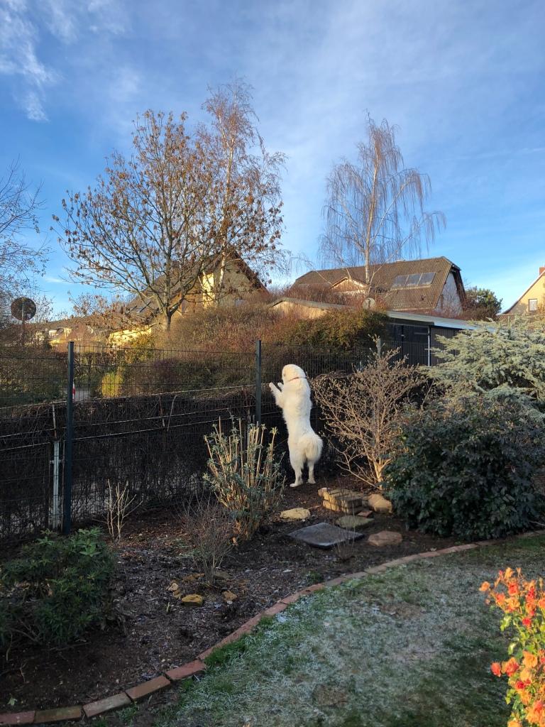 Die Bella guckt über ihren neuen Zaun