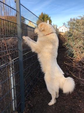 Mein neuer Zaun ist fast so groß wie ich. Fast!