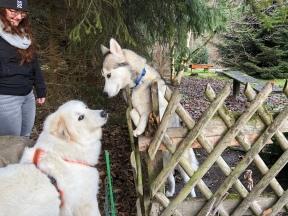 Die Bella und ihr Husky
