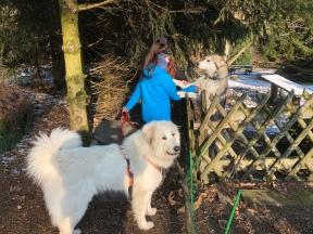Wir sind beim Husky. Am Gartenzaun …