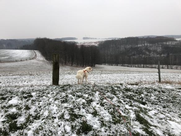 Spaziergang auf der großen Feldwiese
