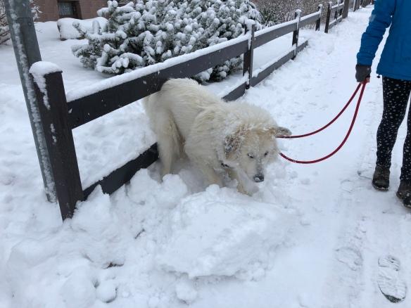 """Die Bella """"schaufelt"""" Schnee"""