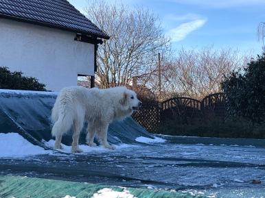 Die Bella auf ihrem Pool mit dem harten Wasser
