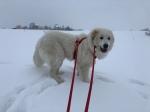 So, jetzt Schneewälzen, Achtung!