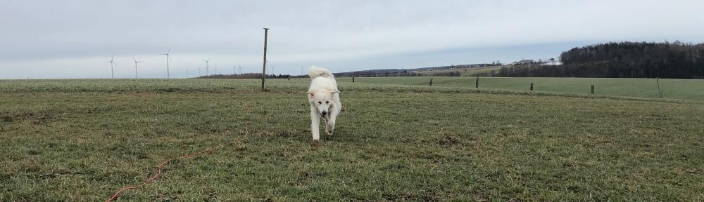 Hahahaaa 🐶😂🐶, die Bella ist ein Flugzeug! Meine Ohren sind die Tragflächen!