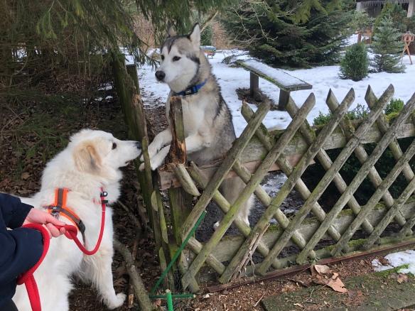 Wir besuchen Spike, den Husky
