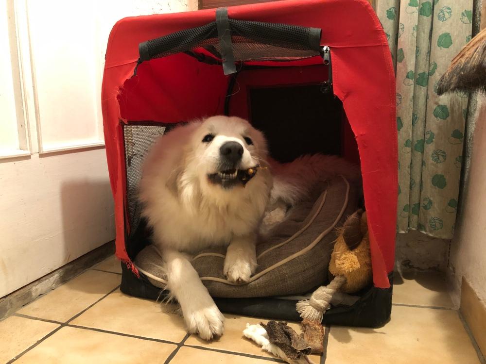 Die Bella sagt schon mal Gute Nacht!