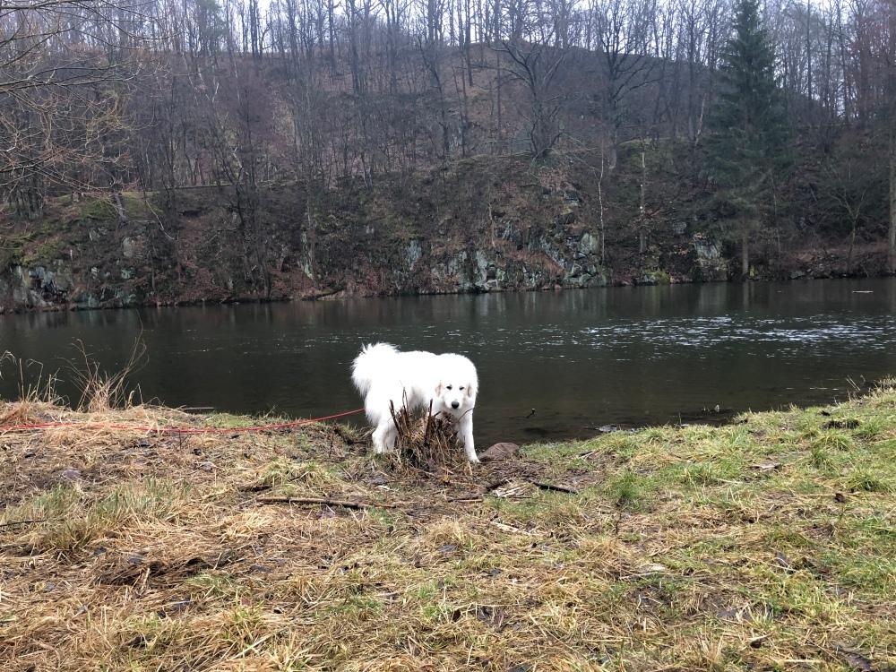 Die Bella auf der Wiese am großen Fluß mit dem komischen Namen