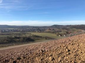 Die Aussicht vom Weinberg