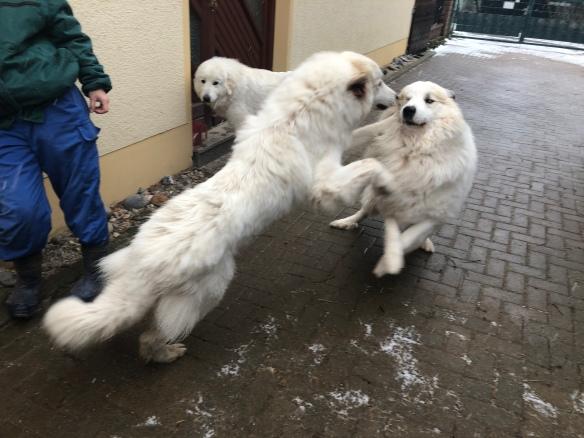 Die Bella begrüßt ihren riesigen Fin