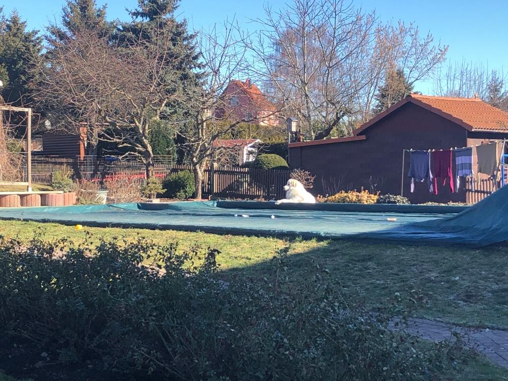 Die Bella liegt gemütlich an ihrem Pool