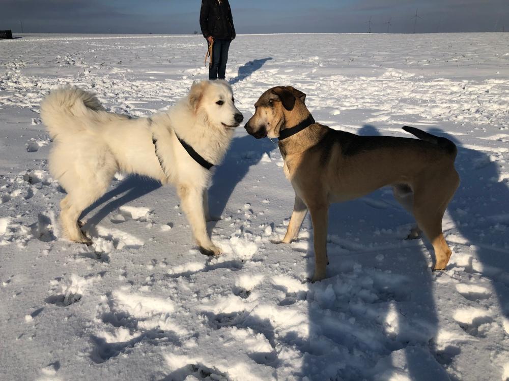Die Bella hat einen neuen Freund getroffen