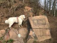 Eine Berghündin kann auch klettern!