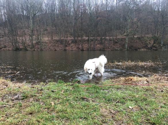… aber die Bella geht trotzdem ins Wasser.