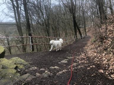 Die Bella wandert durch den Stadtpark