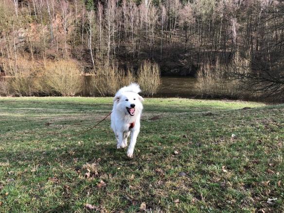 Da lacht die Bella! Spazierengehen mit meinen Menschen ist sooooo schön!