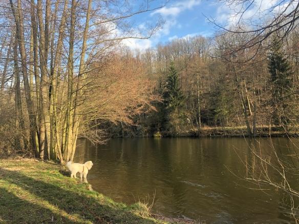 Die Bella am großen Fluß mit dem komischen Namen. Wer genau hinschaut, kann den weißen Reiher im Baum sehen!