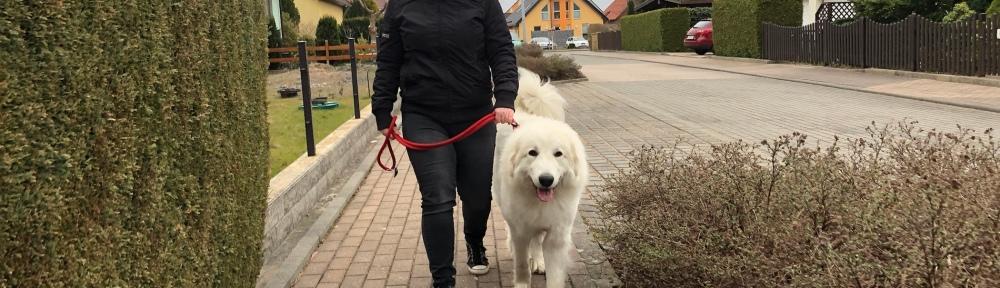 Die Bella geht mit ihrer großen Menschenschwester in ihrem Wohngebiet spazieren