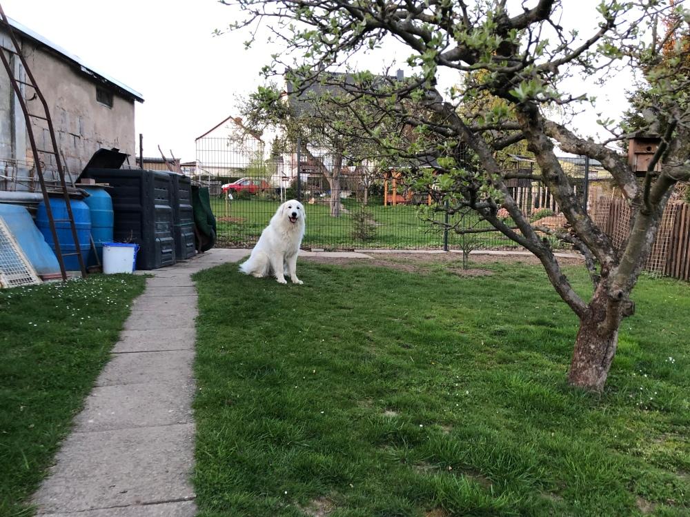 Da sitzt sie in ihrem Garten, die Bella …