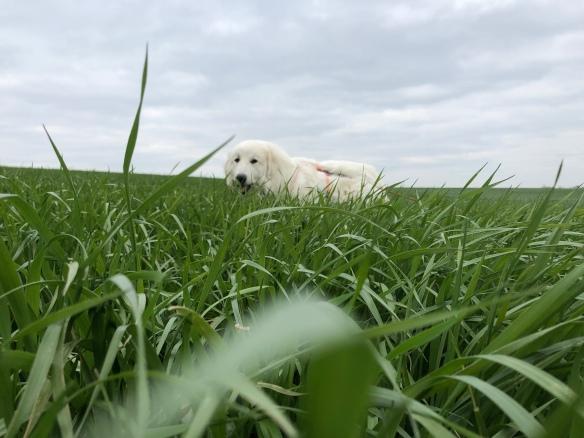 Guggug, die Bella im hohen Gras