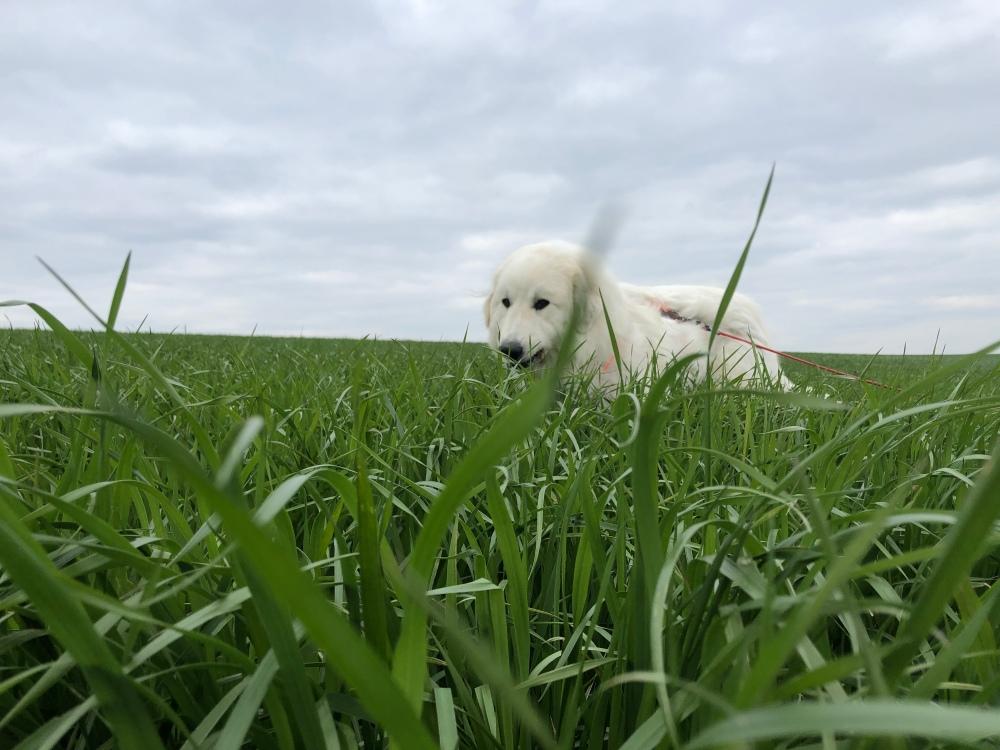 Ich bin viel höher als das hohe Gras